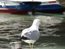 Seagull στην αποβάθρα στοκ εικόνες