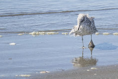 Seagull στην κυματωγή Στοκ φωτογραφία με δικαίωμα ελεύθερης χρήσης