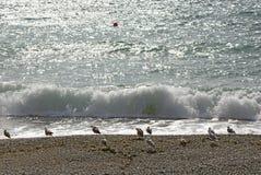 Seagull στην παραλία ενάντια στη θάλασσα κυμάτων και σπινθηρίσματος στοκ εικόνα