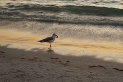 Seagull στην παραλία στοκ εικόνα με δικαίωμα ελεύθερης χρήσης