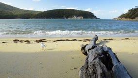 Seagull στην παραλία φιλμ μικρού μήκους
