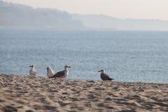 Seagull στην παραλία bulblet Στοκ εικόνες με δικαίωμα ελεύθερης χρήσης