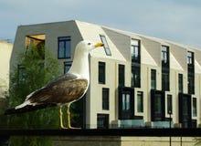 Seagull στην πόλη Στοκ Εικόνες