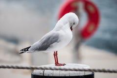 Seagull στη βροχή Στοκ Φωτογραφίες