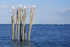 Seagull στη θέση Στοκ φωτογραφία με δικαίωμα ελεύθερης χρήσης