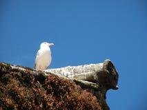 Seagull στη στέγη Στοκ φωτογραφία με δικαίωμα ελεύθερης χρήσης