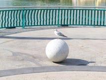 Seagull στη σφαίρα Στοκ Εικόνες