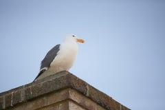 Seagull στον επικεφαλής φάρο Yaquina Στοκ εικόνα με δικαίωμα ελεύθερης χρήσης