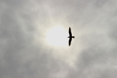 Seagull στον ουρανό Στοκ εικόνα με δικαίωμα ελεύθερης χρήσης