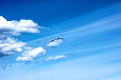 Seagull στον ουρανό στοκ εικόνες