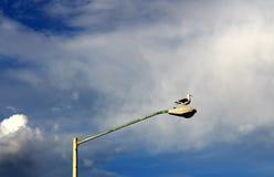 Seagull στον παλαιό φωτεινό σηματοδότη Στοκ Φωτογραφία