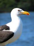 Seagull στον περίβολο Στοκ εικόνες με δικαίωμα ελεύθερης χρήσης