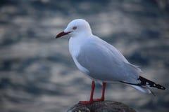 Seagull στον πυλώνα Στοκ Εικόνες