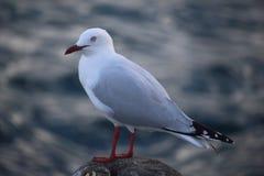Seagull στον πυλώνα 2 Στοκ Φωτογραφία