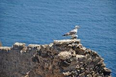 Seagull στον τοίχο του κάστρου Aragonese στο υπόβαθρο Στοκ φωτογραφία με δικαίωμα ελεύθερης χρήσης