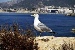 Seagull στο βράχο στοκ φωτογραφίες