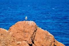 Seagull στο βράχο Στοκ φωτογραφία με δικαίωμα ελεύθερης χρήσης