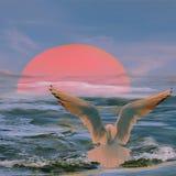 Seagull στο ηλιοβασίλεμα Στοκ Φωτογραφίες