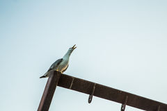 Seagull στο λιμένα Στοκ Φωτογραφία