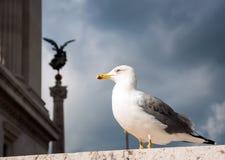 Seagull στο κέντρο της Ρώμης στοκ φωτογραφίες με δικαίωμα ελεύθερης χρήσης