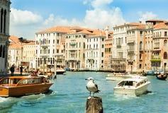 Seagull στο κανάλι, Βενετία, Ιταλία Στοκ εικόνες με δικαίωμα ελεύθερης χρήσης