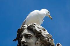 Seagull στο κεφάλι του αγάλματος στην κύρια Ρώμη Στοκ Εικόνες