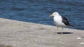 Seagull στο λόρδο της Λισσαβώνας Στοκ Εικόνα
