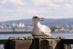 Seagull στο φράκτη στοκ εικόνες
