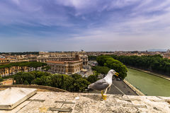 Seagull στο Castle Sant'Angelo, Ρώμη Στοκ Εικόνες