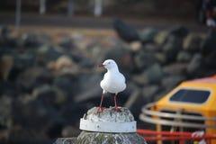 Seagull στο pylon ευρύ πυροβολισμό Στοκ φωτογραφία με δικαίωμα ελεύθερης χρήσης