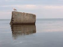 Seagull συνεδρίαση σε έναν μεγάλο βράχο στην παραλία Τοπίο της ειρήνης και του spokoystaiya Shtil Στοκ Εικόνα