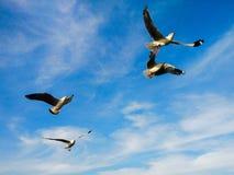 seagull Ταϊλάνδη στοκ φωτογραφία με δικαίωμα ελεύθερης χρήσης