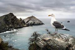 Seagull & το βασίλειό του Στοκ Εικόνες