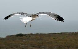 Seagull τρέπεται σε φυγή επάνω από την παραλία Στοκ φωτογραφίες με δικαίωμα ελεύθερης χρήσης