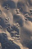 Seagull τυπωμένες ύλες στο ίδιο πράγμα στοκ εικόνες