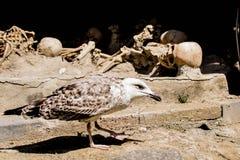 Seagull των νεκρών στοκ εικόνες