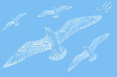 Seagull υπόβαθρο Στοκ φωτογραφίες με δικαίωμα ελεύθερης χρήσης