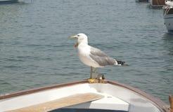 seagull χασμουρητό στοκ εικόνα με δικαίωμα ελεύθερης χρήσης