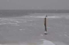 seagull χιόνι Στοκ Φωτογραφία