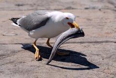 seagull ψαριών Στοκ Εικόνες
