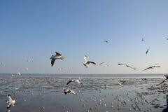 Seagull όμορφο Στοκ Φωτογραφία