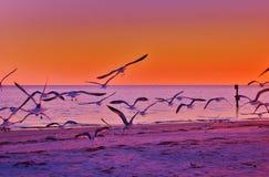 Seagull& x27; 在日落的s!!! 库存图片
