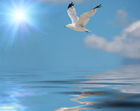 Seagull. Flying seagull against sky with clouds and water vector illustration