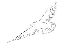 Seagull. Black drawing of seagull isolated on the white Royalty Free Stock Photos