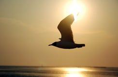 Seagull. At Bang pu - Thailand Stock Photography