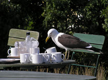 Seagull. On a table Royalty Free Stock Photo