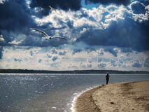 Seagull. Beautiful landscape, river,reflections, relax Stock Image