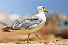 Seagull. A photo of a seagull and blue sky Stock Photo