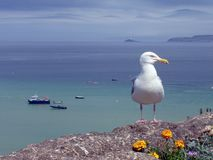 Free Seagull Stock Photos - 2474193