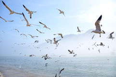 Seagull. Many of seagulls upon the sea Royalty Free Stock Image